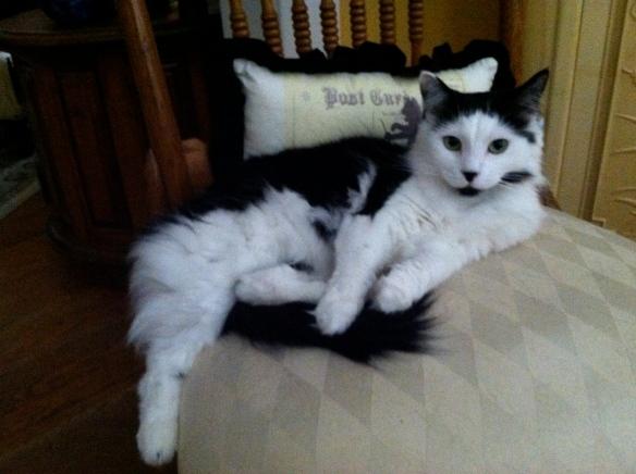 Coco Chanel resting - tangledpasta.net