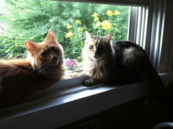 Shelton and Fellini, a wary window truce - tangledpasta.net