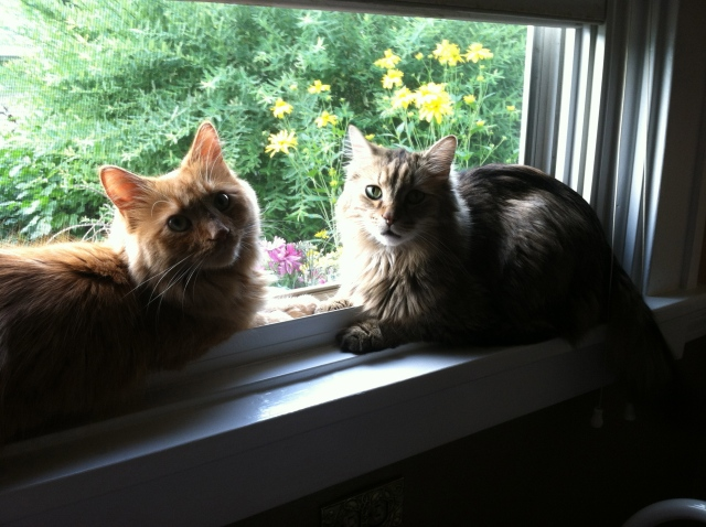 Shelton and Fellini, a wary window truce - tangledpasta.net