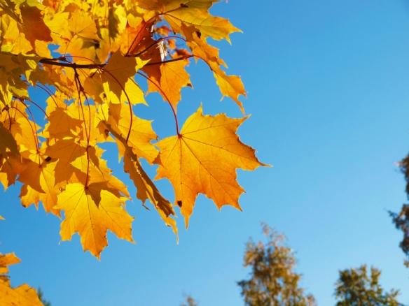 A dazzling autumn morning lifts my spirits - tangledpasta.net