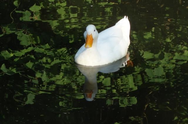 I am a lucky duck because of good friends - tangledpasta.net