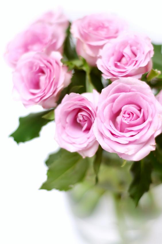 Aunt Adelaide loves roses - tangledpasta.net