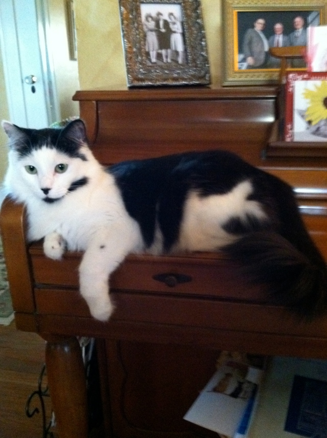 Coco Chanel welcomes autumn weather by lying on the piano=-tangledpasta.net
