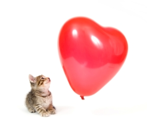 Like the kitten, I watched Valentine's Day float away from me. - tangledpasta.net
