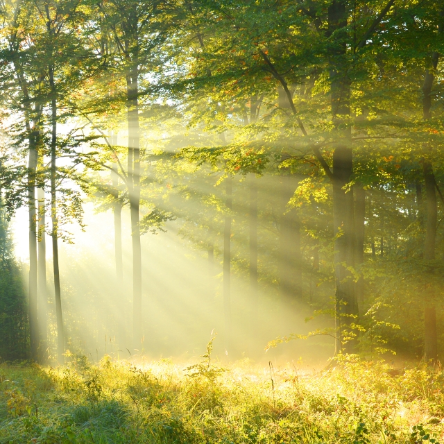 When one cannot see the forest for the trees, a new dawn eventually appears. - tangledpasta.net
