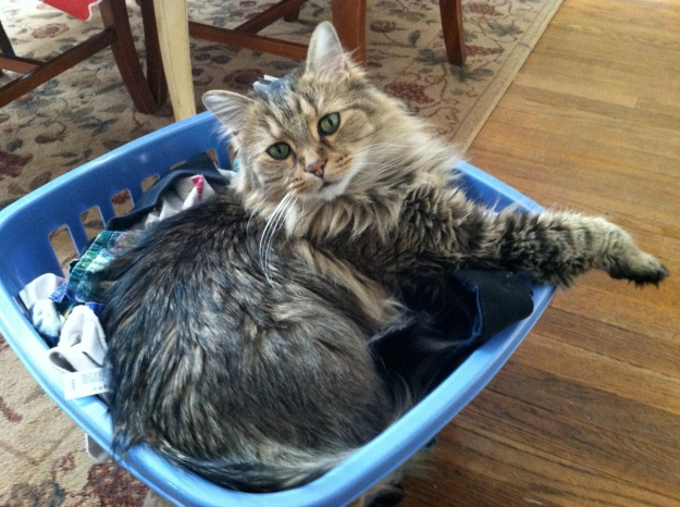 Fellini also liked nothing better than sitting atop a basket of clean laundry-tangledpasta.net
