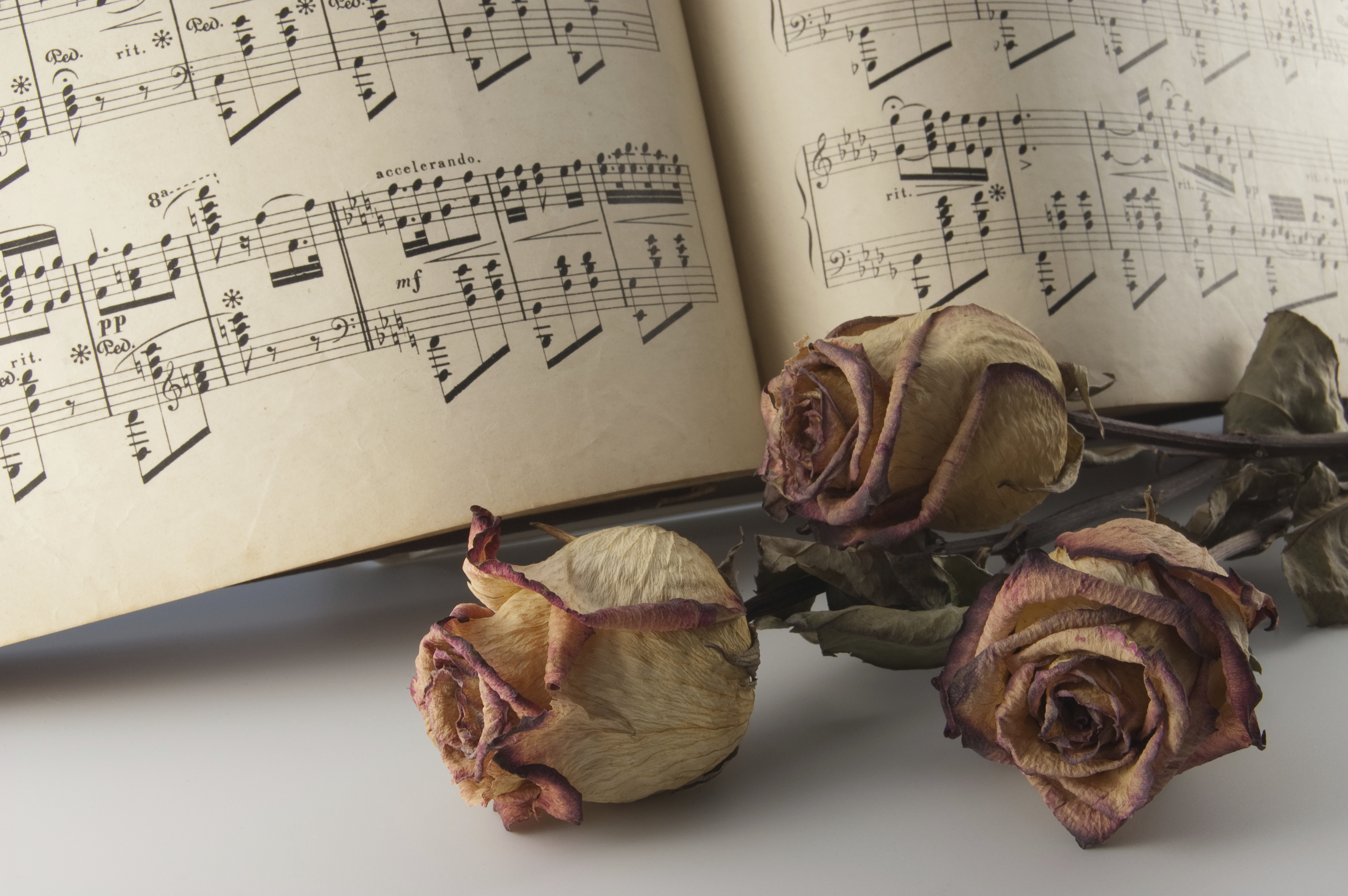 Roses with notes